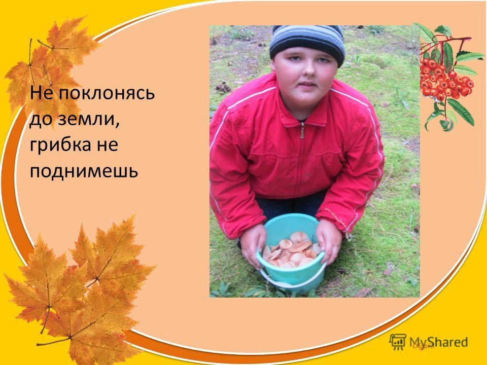 Olga73 Не поклонясь до земли, грибка не поднимешь