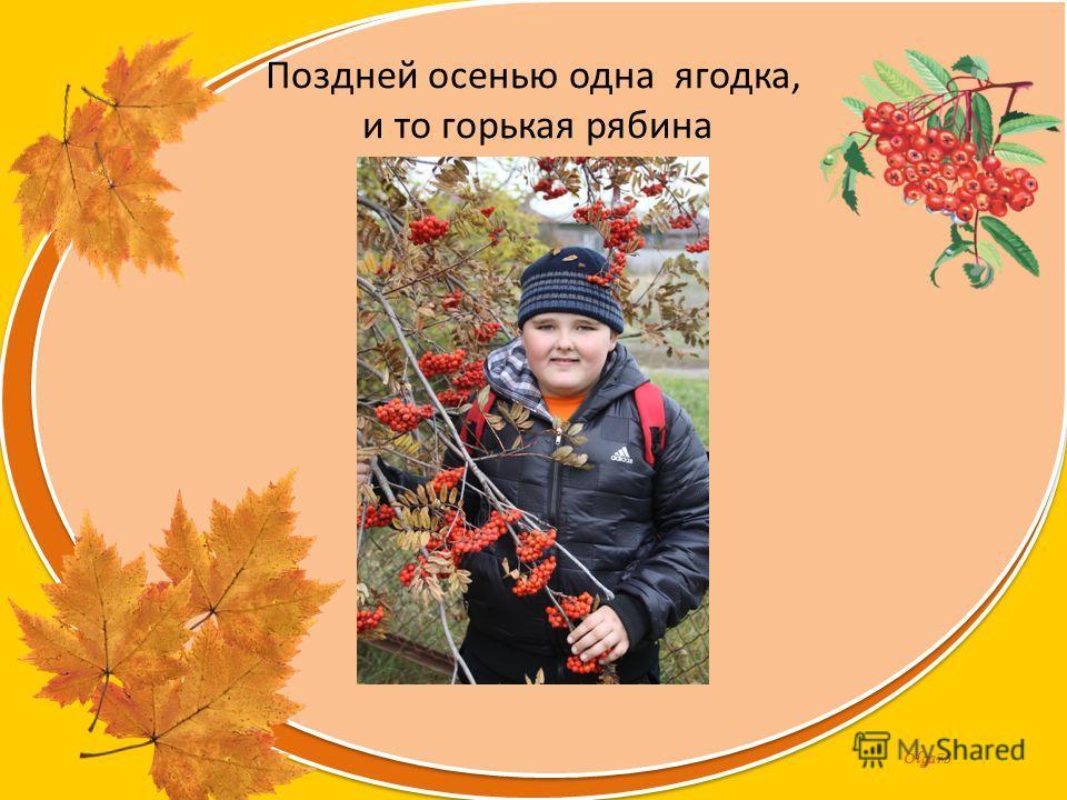 Olga73 Поздней осенью одна ягодка, и то горькая рябина
