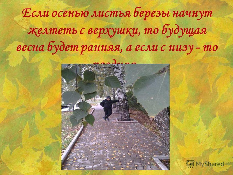 Если осенью листья березы начнут желтеть с верхушки, то будущая весна будет ранняя, а если с низу - то поздняя.