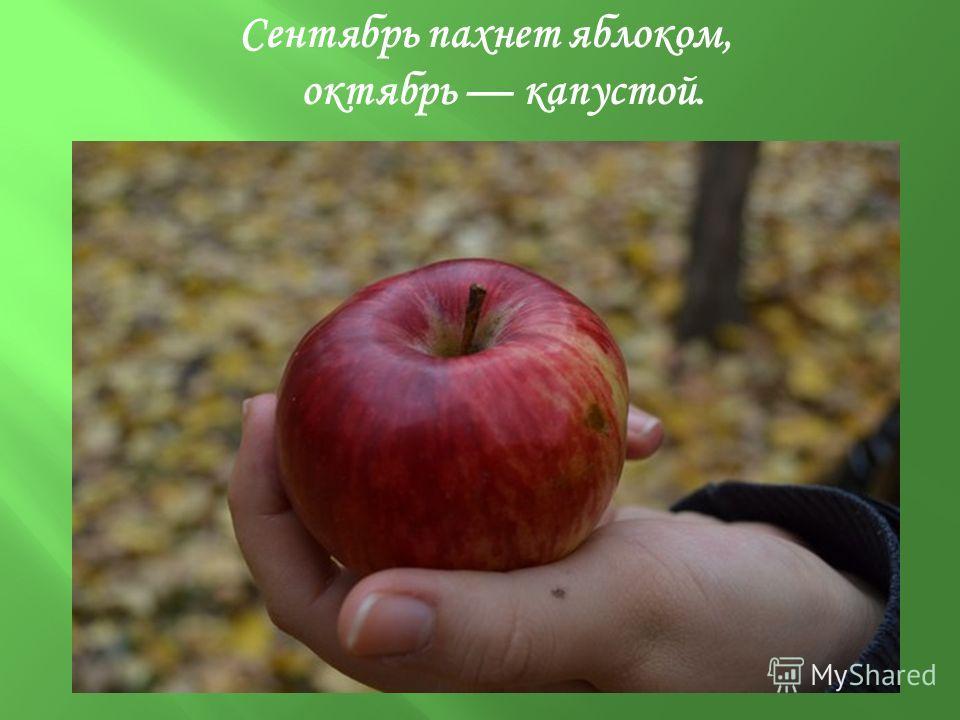 Сентябрь пахнет яблоком, октябрь капустой.