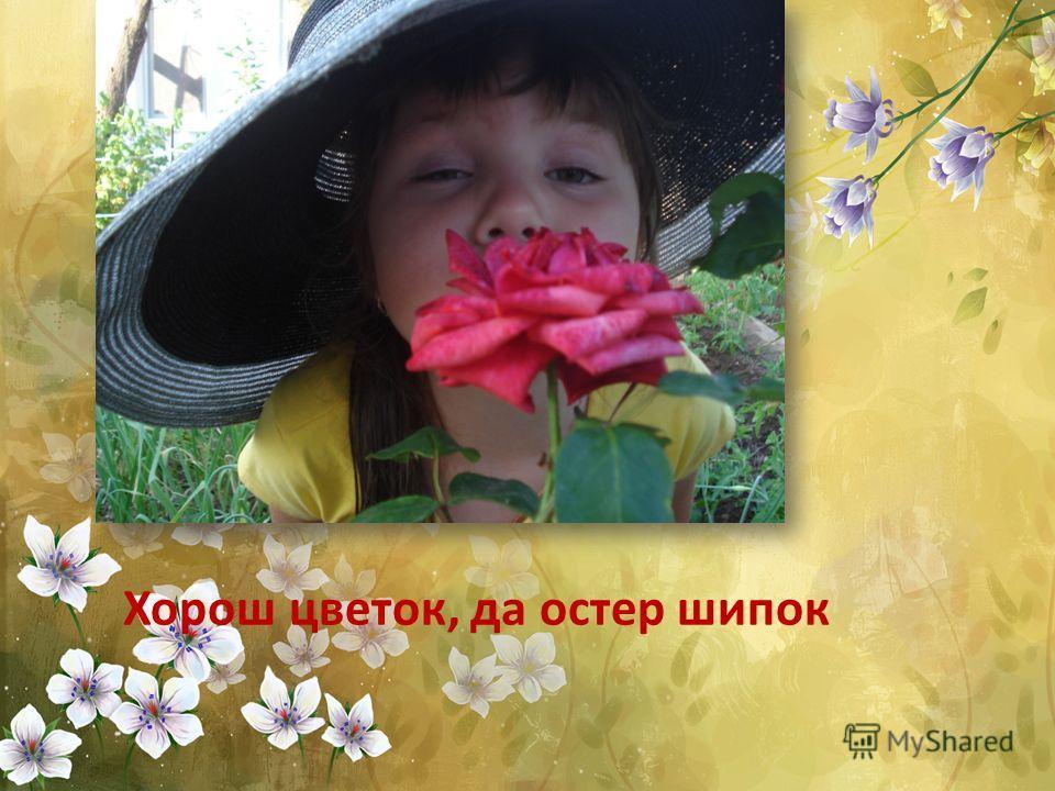 Хорош цветок, да остер шипок