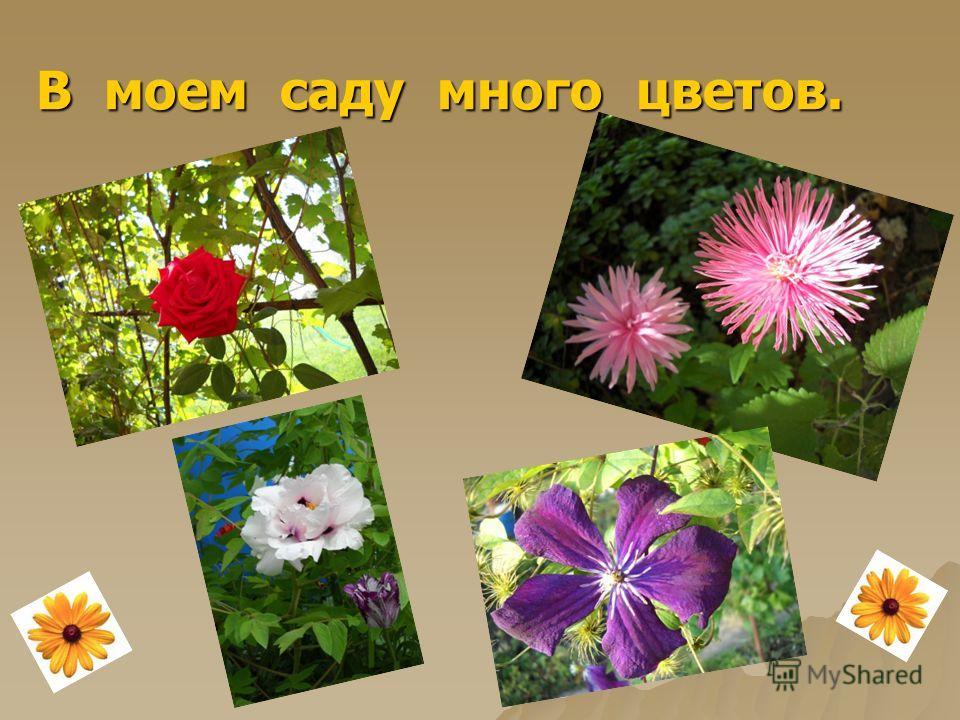 В моем саду много цветов. В моем саду много цветов.