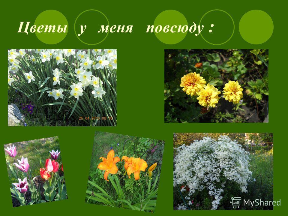 Цветы у меня повсюду :