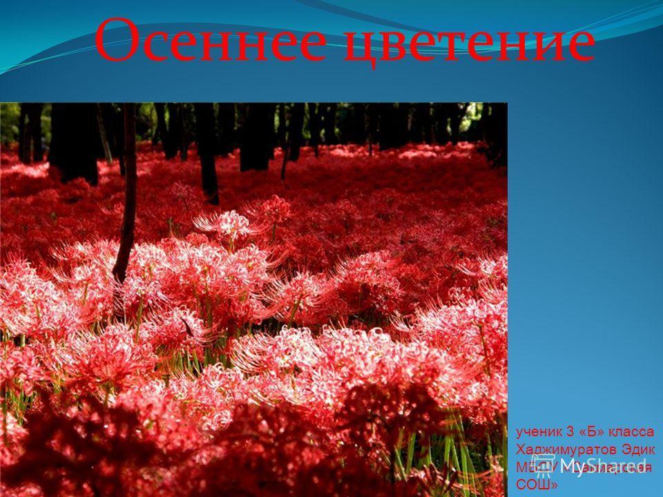 Осеннее цветение ученик 3 «Б» класса Хаджимуратов Эдик МБОУ «Сакмарская СОШ»