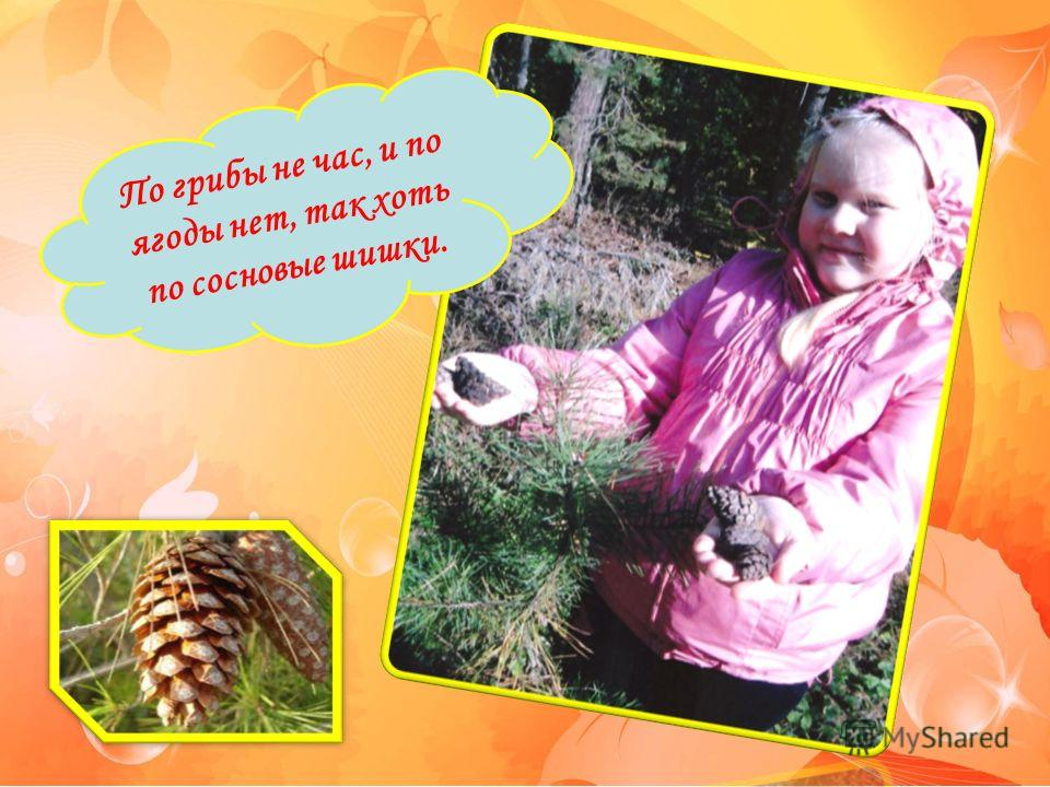 По грибы не час, и по ягоды нет, так хоть по сосновые шишки.