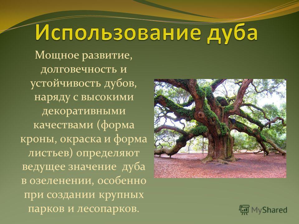 Мощное развитие, долговечность и устойчивость дубов, наряду с высокими декоративными качествами (форма кроны, окраска и форма листьев) определяют ведущее значение дуба в озеленении, особенно при создании крупных парков и лесопарков.
