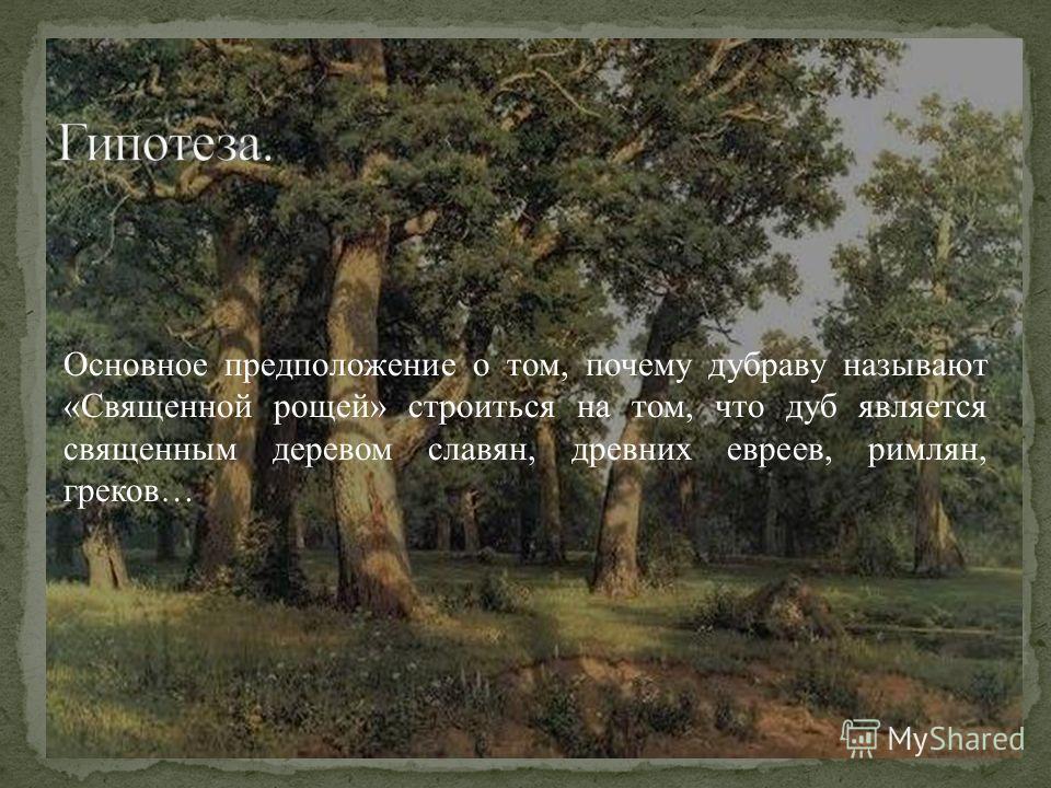 Основное предположение о том, почему дубраву называют «Священной рощей» строиться на том, что дуб является священным деревом славян, древних евреев, римлян, греков…