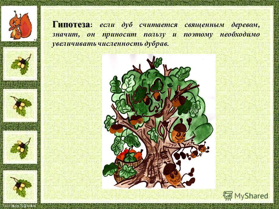 Гипотеза Гипотеза : если дуб считается священным деревом, значит, он приносит пользу и поэтому необходимо увеличивать численность дубрав.