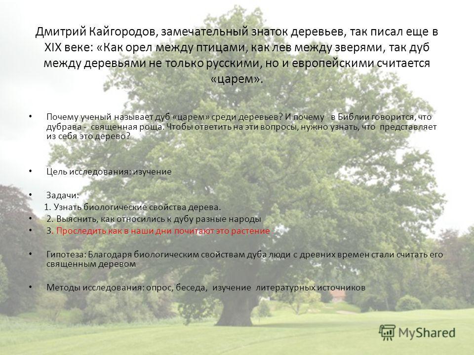Дмитрий Кайгородов, замечательный знаток деревьев, так писал еще в XIX веке: «Как орел между птицами, как лев между зверями, так дуб между деревьями не только русскими, но и европейскими считается «царем». Почему ученый называет дуб «царем» среди дер