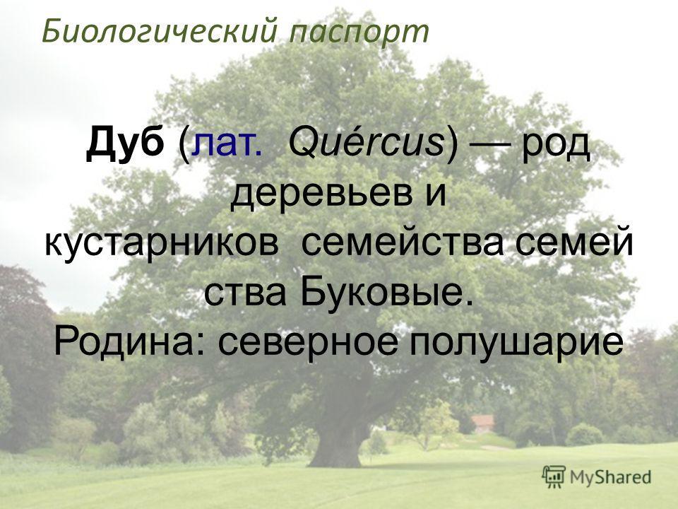 Биологический паспорт Дуб (лат. Quércus) род деревьев и кустарников семейства семей ства Буковые. Родина: северное полушарие