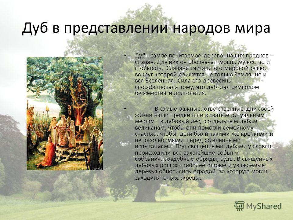 Дуб в представлении народов мира Дуб - самое почитаемое дерево наших предков – славян. Для них он обозначал мощь, мужество и стойкость. Славяне считали его мировой осью, вокруг которой движется не только Земля, но и вся Вселенная. Сила его древесины