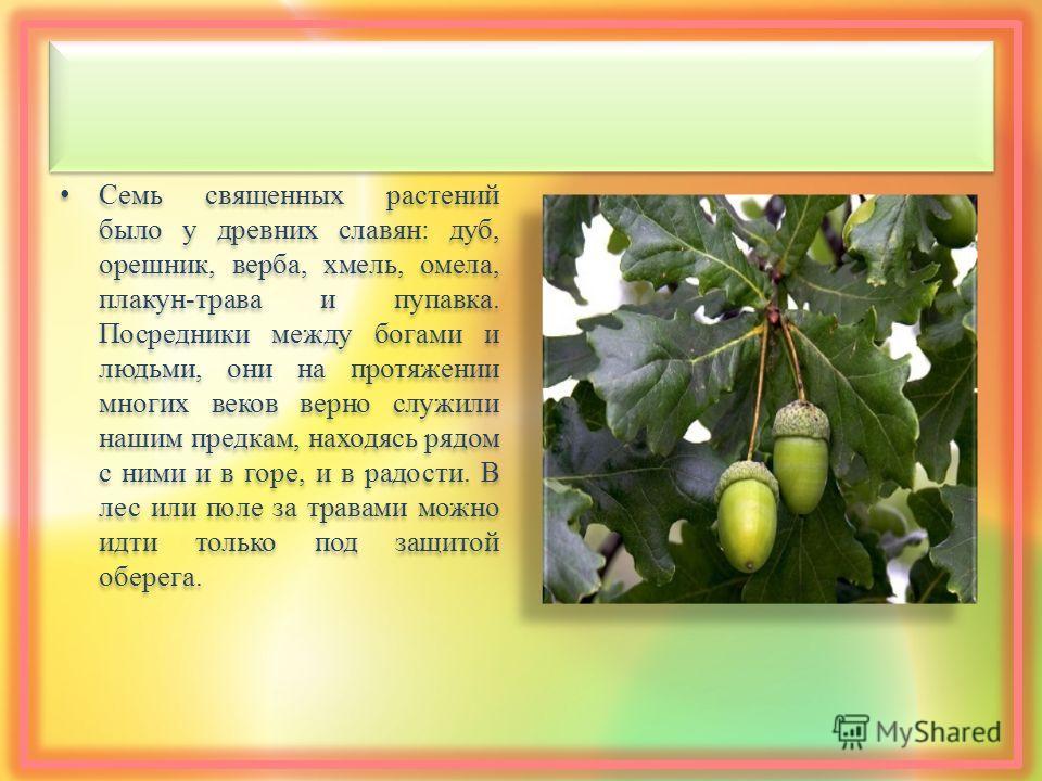 Семь священных растений было у древних славян : дуб, орешник, верба, хмель, омела, плакун - трава и пупавка. Посредники между богами и людьми, они на протяжении многих веков верно служили нашим предкам, находясь рядом с ними и в горе, и в радости. В