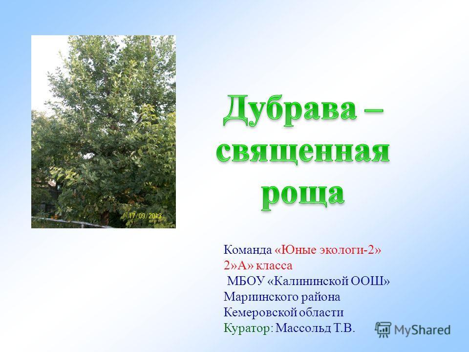 Команда «Юные экологи-2» 2»А» класса МБОУ «Калининской ООШ» Мариинского района Кемеровской области Куратор: Массольд Т.В.