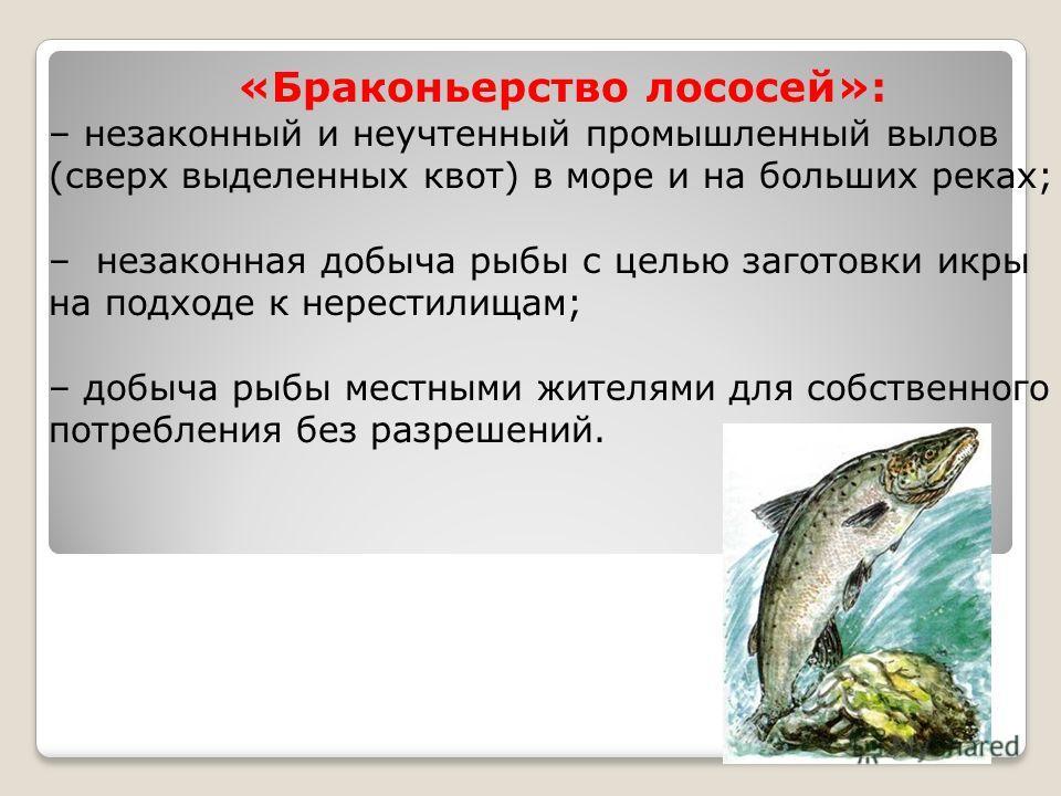 «Браконьерство лососей»: – незаконный и неучтенный промышленный вылов (сверх выделенных квот) в море и на больших реках; – незаконная добыча рыбы с целью заготовки икры на подходе к нерестилищам; – добыча рыбы местными жителями для собственного потре