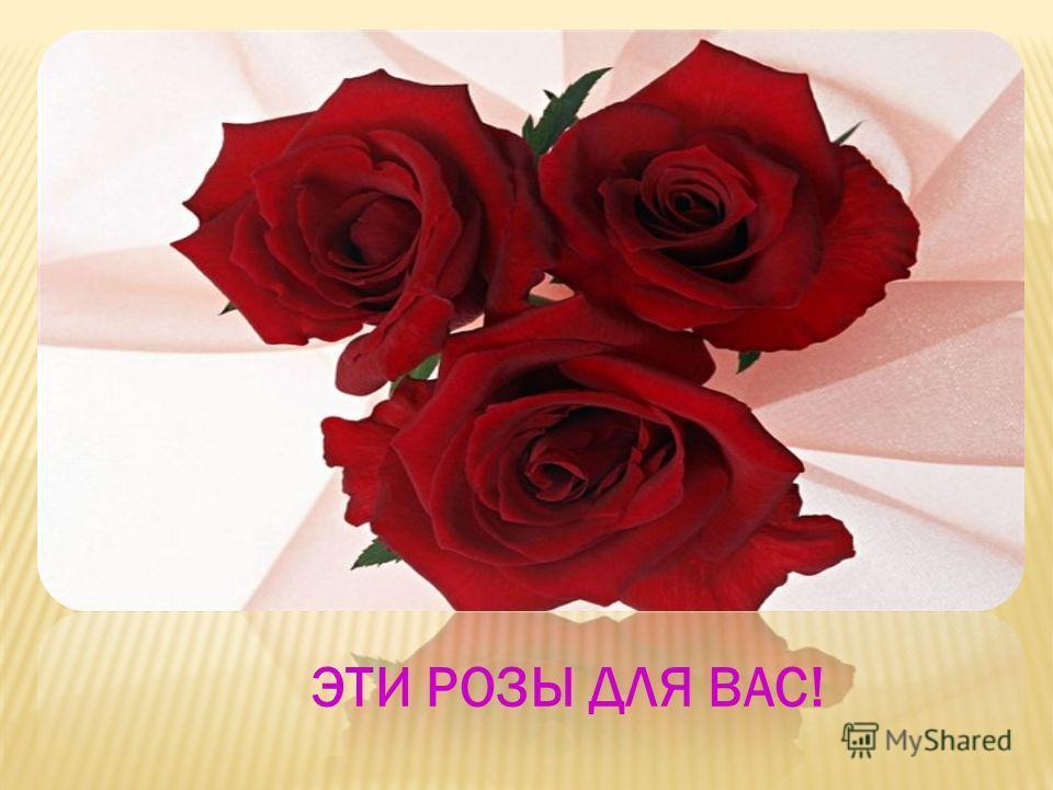 Эти прекрасные розы источают нежный Аромат… Розы обладают лечебными свойствами
