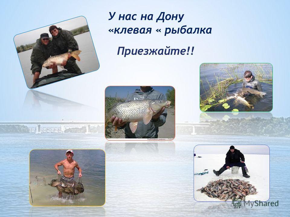 Наш Дон- Батюшка