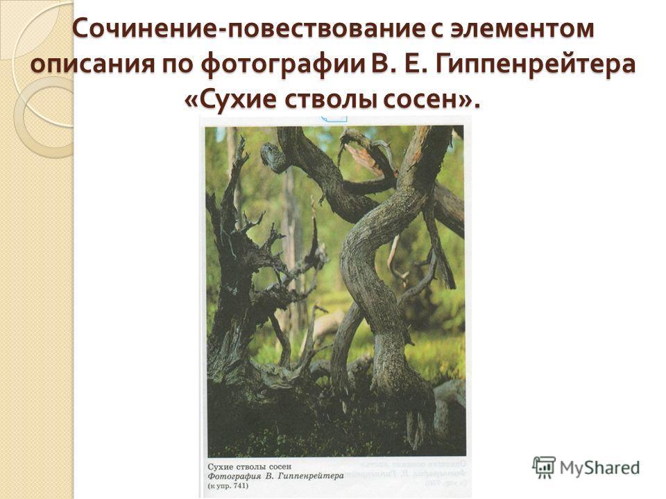 Сочинение - повествование с элементом описания по фотографии В. Е. Гиппенрейтера « Сухие стволы сосен ».