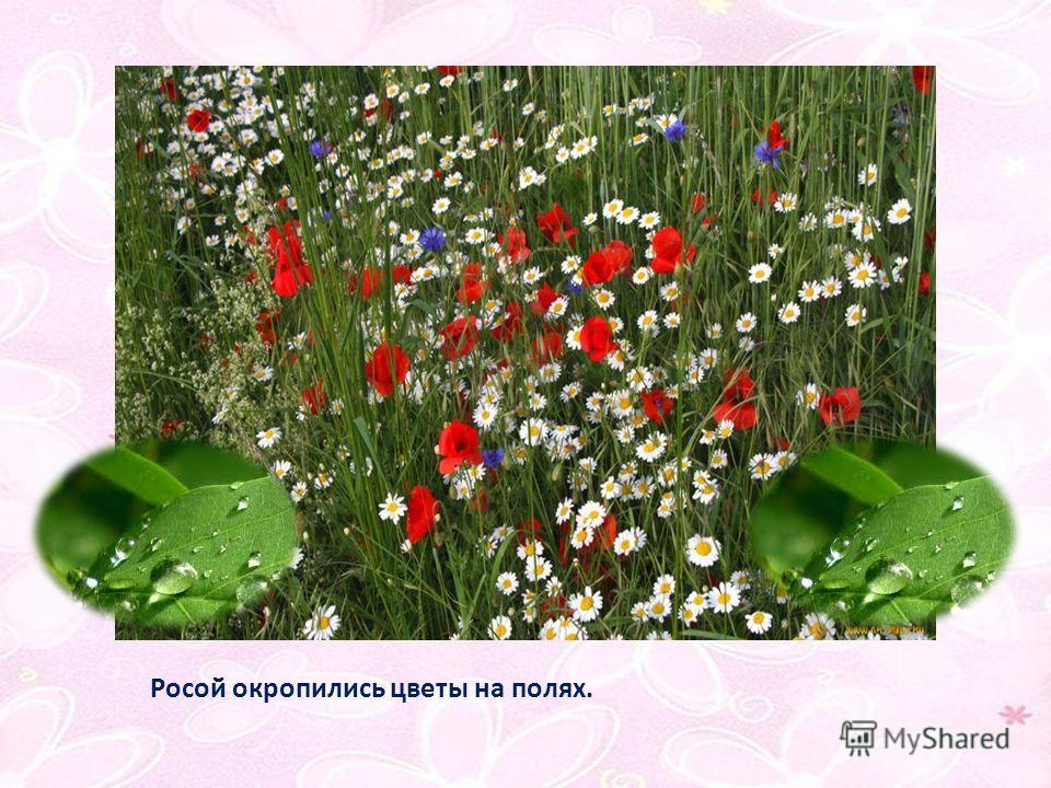 Росой окропились цветы на полях.