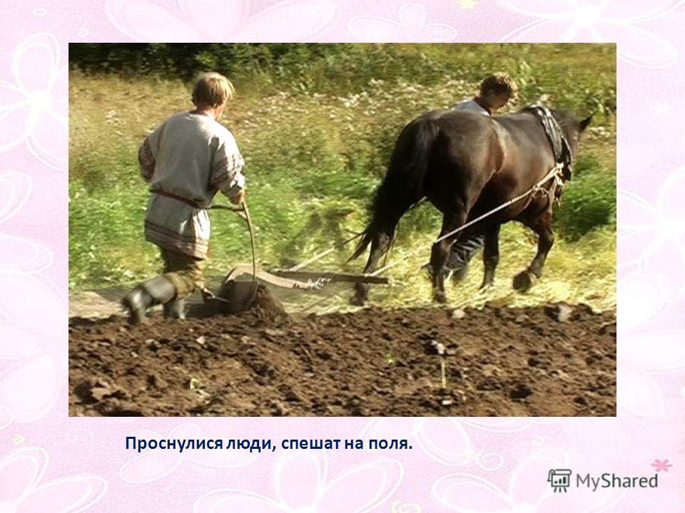 Проснулися люди, спешат на поля.