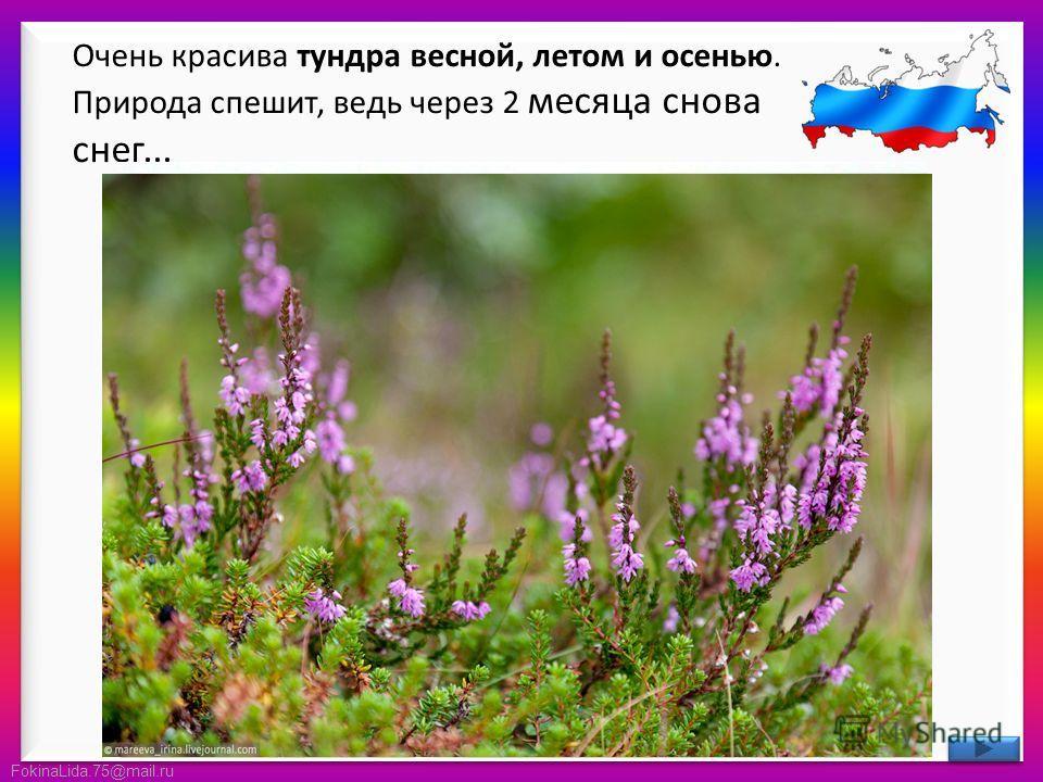 FokinaLida.75@mail.ru Очень красива тундра весной, летом и осенью. Природа спешит, ведь через 2 месяца снова снег...