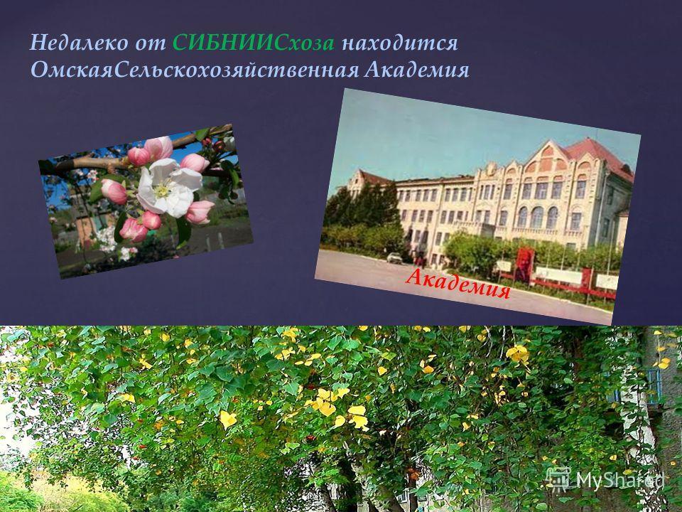 СИБНИИСхоз – это микрорайон по названию Сибирского Научно-Исследовательского Института Сельского хозяйства Это главное здание института