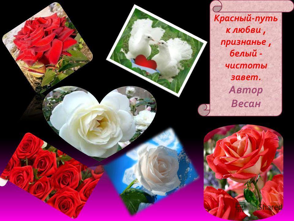 Роз букет- очарованье, дарит символ каждый цвет.