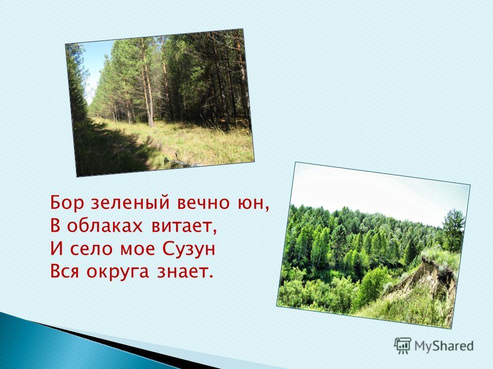 Бор зеленый вечно юн, В облаках витает, И село мое Сузун Вся округа знает.