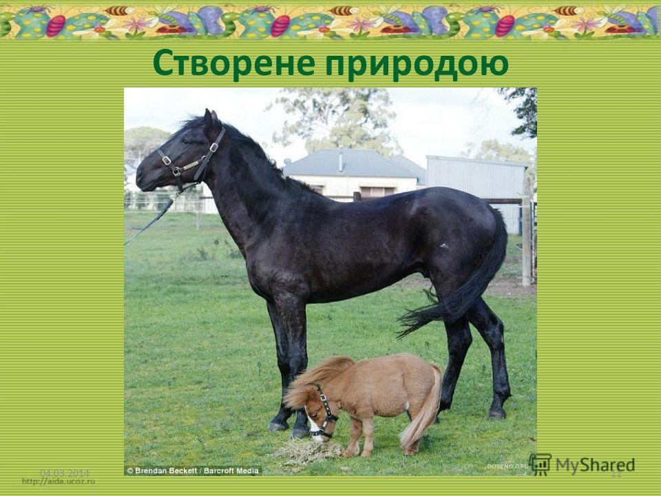 Створене природою 04.03.201411