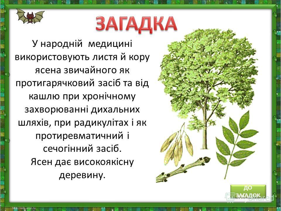 У народній медицині використовують листя й кору ясена звичайного як протигарячковий засіб та від кашлю при хронічному захворюванні дихальних шляхів, при радикулітах і як протиревматичний і сечогінний засіб. Ясен дає високоякісну деревину. ДО ЗАГАДОК