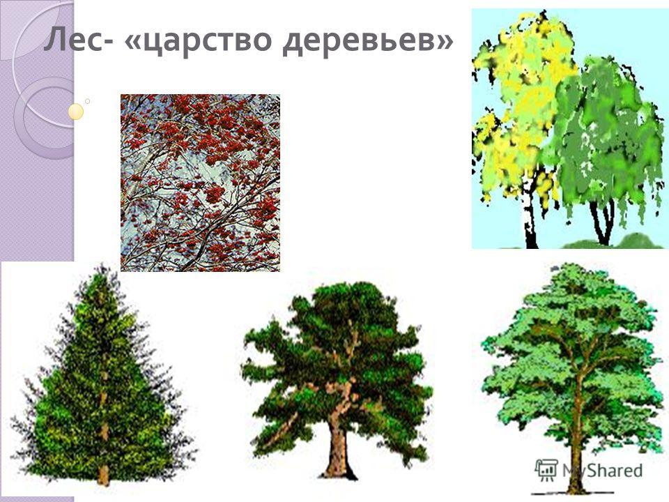 ДеревьяКустарникиТравянистые растения