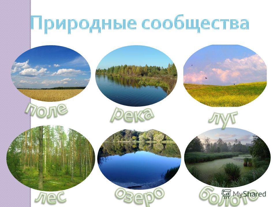 Природное сообщество – это единство живой и неживой природы, которое складывается в определенных условиях окружающей среды.