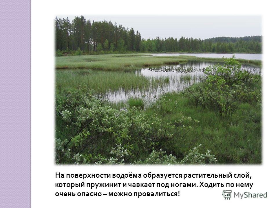 Осенью зелёные части растений погибают, весной вырастают новые.