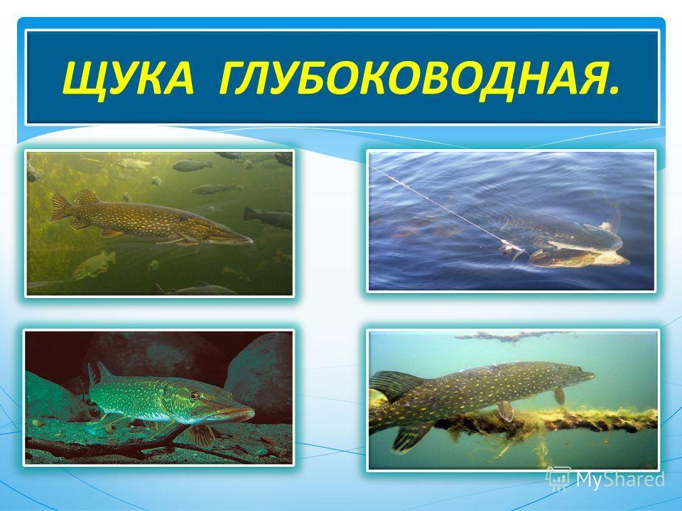 МОИ УВЛЕЧЕНИЯ. Рыбалка на Амуре. Юрий Насадюк.
