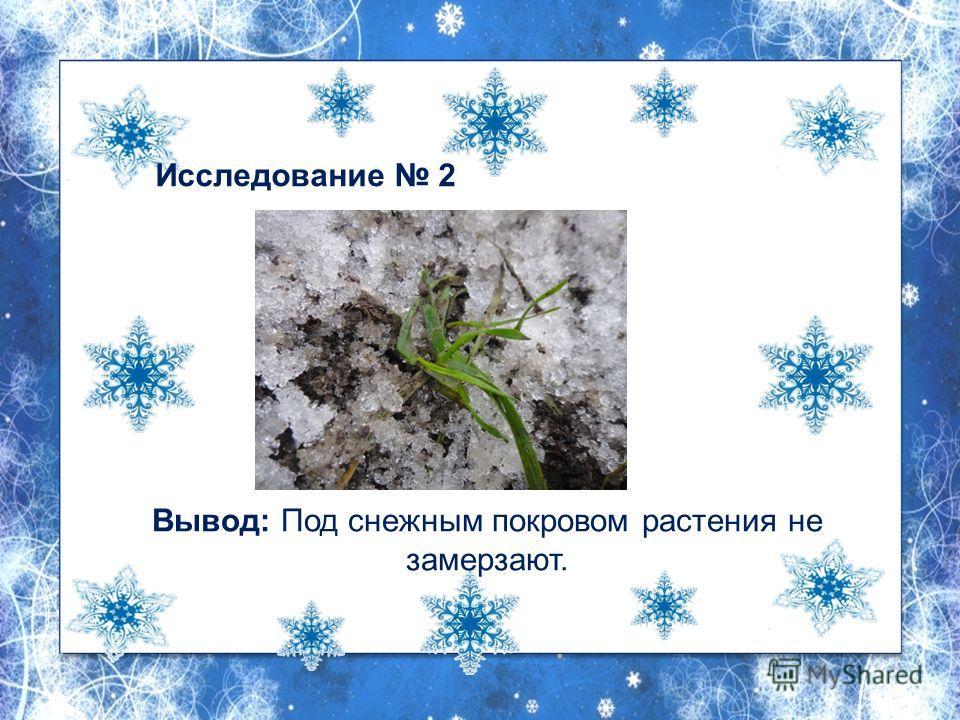 Исследование 2 Вывод: Под снежным покровом растения не замерзают.