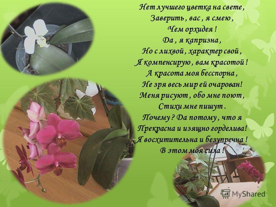 Нет лучшего цветка на свете, Заверить, вас, я смею, Чем орхидея ! Да, я капризна, Но с лихвой, характер свой, Я компенсирую, вам красотой ! А красота моя бесспорна, Не зря весь мир ей очарован! Меня рисуют, обо мне поют, Стихи мне пишут. Почему ? Да