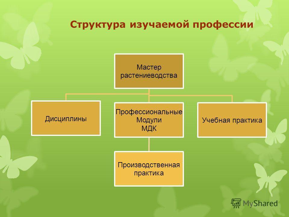 Структура изучаемой профессии Мастер растениеводства Дисциплины Профессиональные Модули МДК Производственная практика Учебная практика