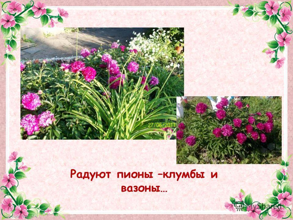 FokinaLida.75@mail.ru Радуют пионы –клумбы и вазоны…