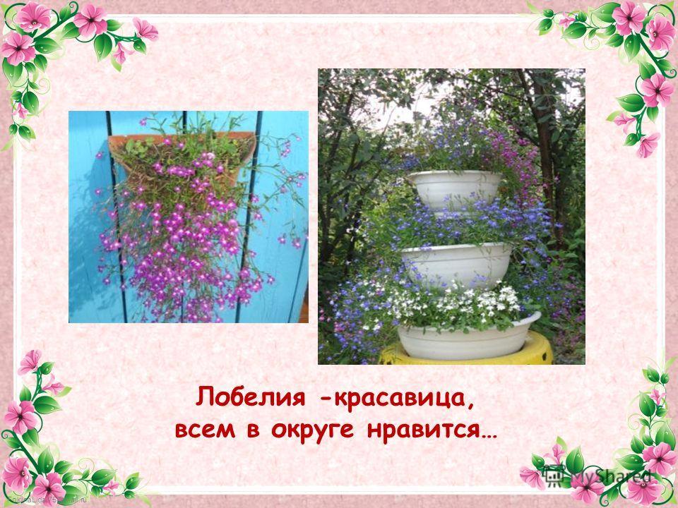 FokinaLida.75@mail.ru Лобелия -красавица, всем в округе нравится…
