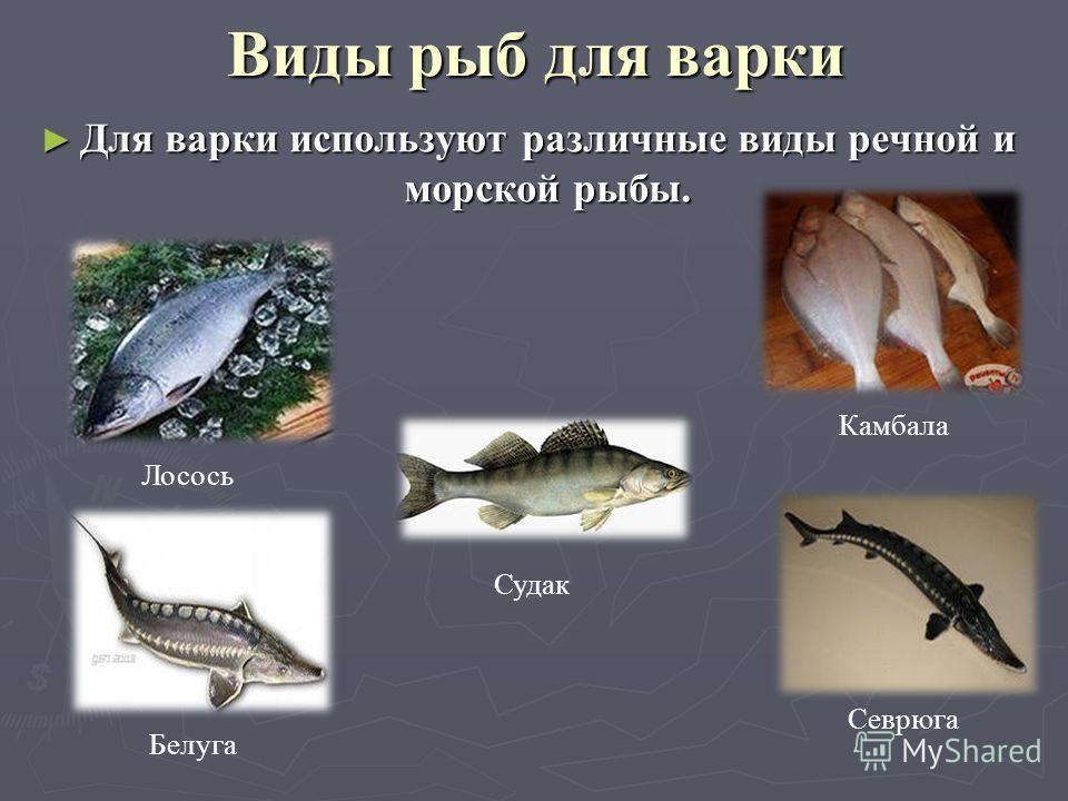 Виды рыб для варки Для варки используют различные виды речной и морской рыбы. Для варки используют различные виды речной и морской рыбы. Лосось Камбала Белуга Севрюга Судак