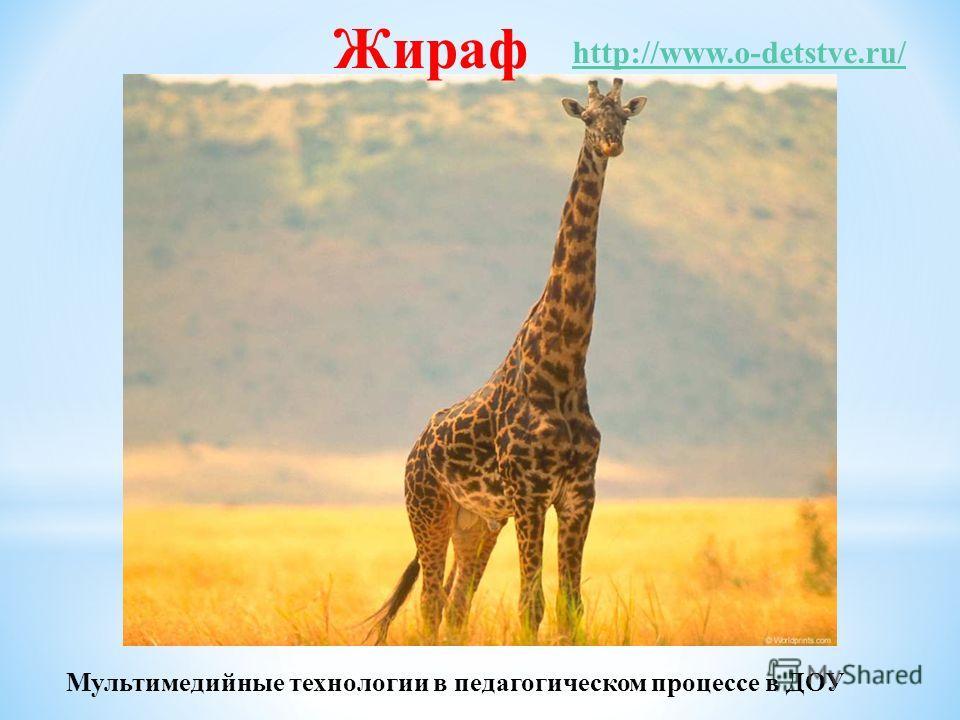 Жираф http://www.o-detstve.ru/ Мультимедийные технологии в педагогическом процессе в ДОУ