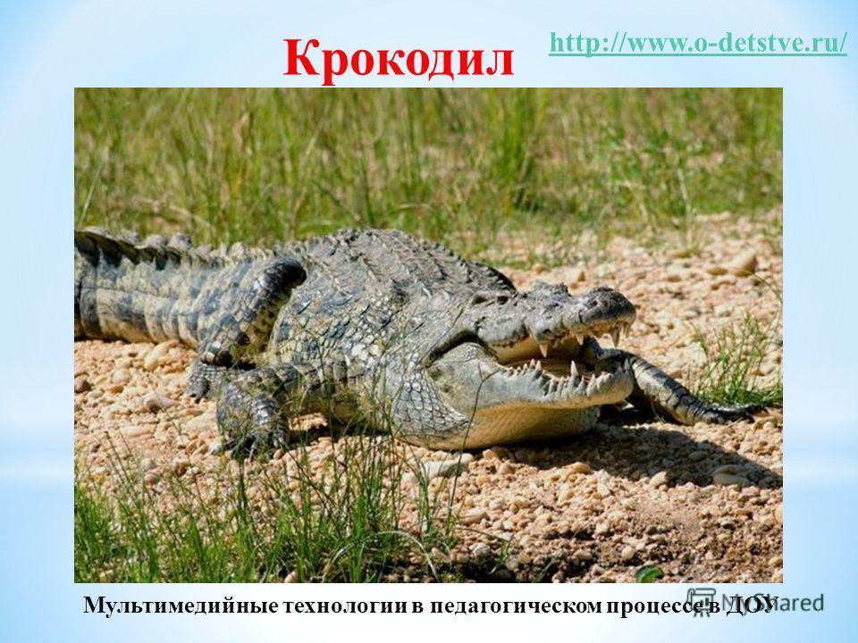 Крокодил http://www.o-detstve.ru/ Мультимедийные технологии в педагогическом процессе в ДОУ