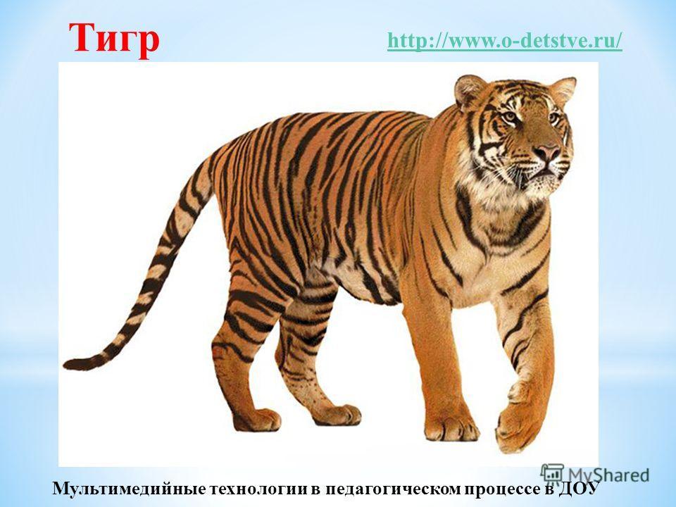 Тигр http://www.o-detstve.ru/ Мультимедийные технологии в педагогическом процессе в ДОУ