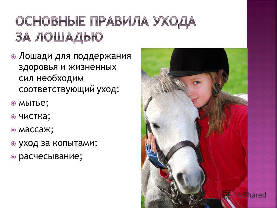 Лошади для поддержания здоровья и жизненных сил необходим соответствующий уход: мытье; чистка; массаж; уход за копытами; расчесывание;