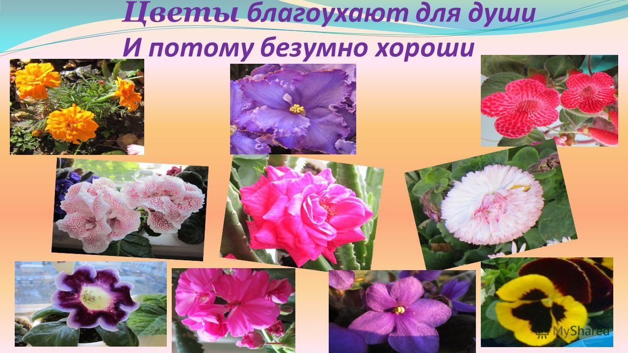 Цветы благоухают для души И потому безумно хороши
