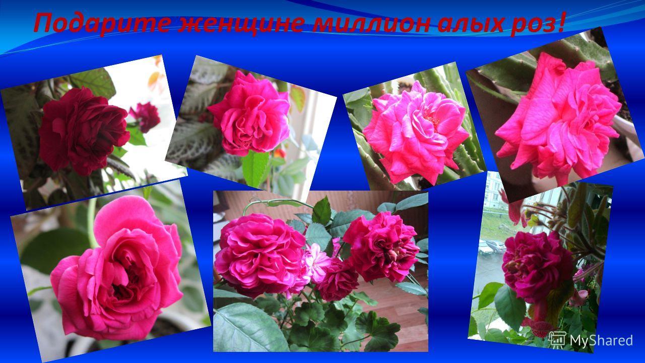 Подарите женщине миллион алых роз!