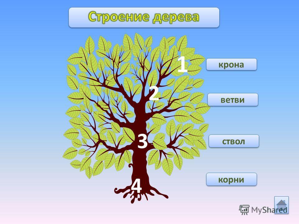 крона 1 2 ветви ствол корни 4 3