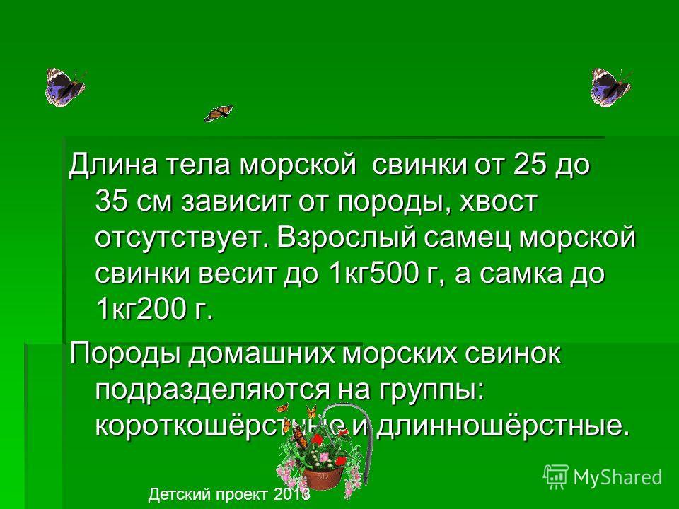 Так вот, если вы решили завестись морскую свинку, то сначала внимательно познакомьтесь с ее биологией, и тогда вы узнаете, что большинство диких родственников свинок вообще не умеют плавать. http://www.o-detstve.ruhttp://www.o-detstve.ru Портал «О де
