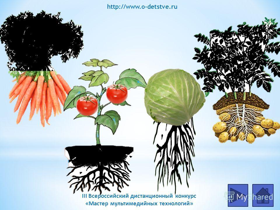«Вершки или корешки» Дидактическая задача: Расширение знаний об особенностях различных овощей. Ход игры: 1.Для начала игры нажми на гиперссылку 2.Назови, что употребляют в пищу у овощей «вершки или корешки»? 3.Проверяй ответ нажимая на овощ. 4. Верну