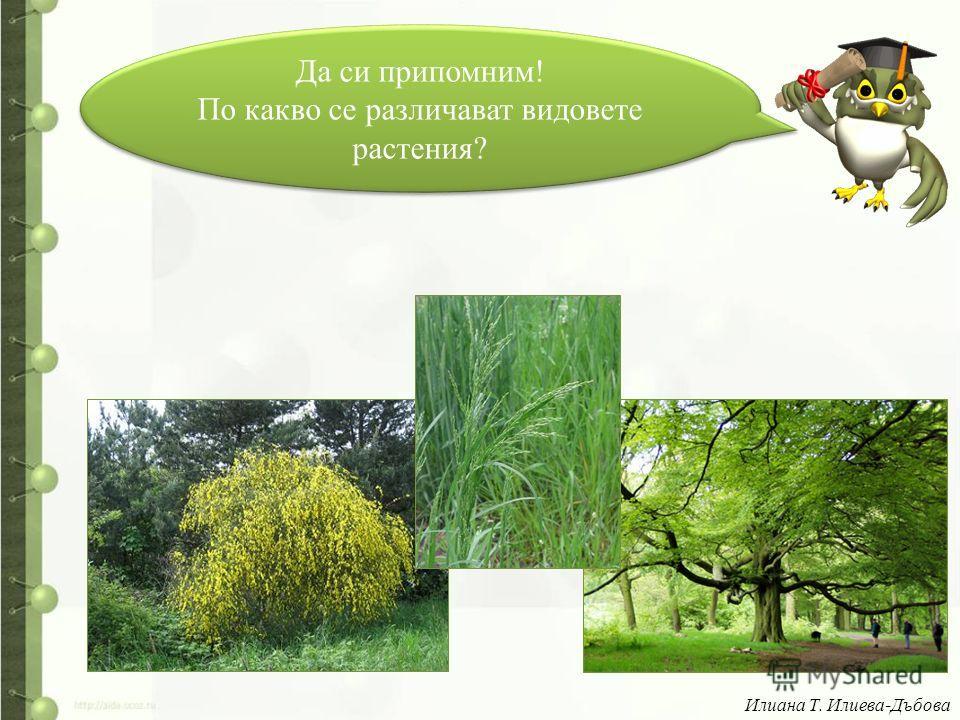 Да си припомним! По какво се различават видовете растения? Да си припомним! По какво се различават видовете растения? Илиана Т. Илиева-Дъбова