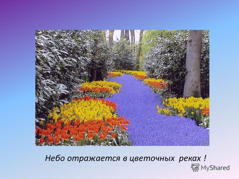 Небо отражается в цветочных реках !